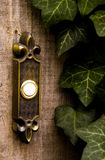 Doorbell around some Ivy. Stock Photo