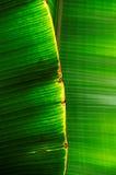 Doorbladert Stock Fotografie