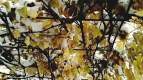 Doorbladert Stock Foto's