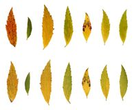 Doorbladert, de herfstkleuren Royalty-vrije Stock Foto's