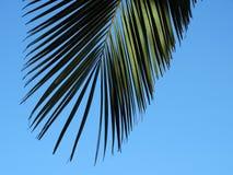 Doorbladert van een palmtree in zuidelijk Spanje Stock Afbeeldingen