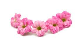 Doorboor kleine mooie bloemen Stock Foto