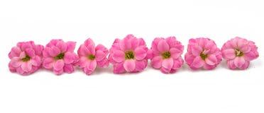 Doorboor kleine mooie bloemen Stock Fotografie