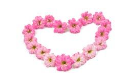 Doorboor kleine mooie bloemen Stock Afbeeldingen