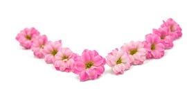 Doorboor kleine mooie bloemen Stock Afbeelding