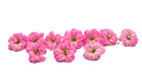 Doorboor kleine mooie bloemen Stock Foto's