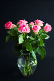 Doorboor rozen royalty-vrije stock afbeelding
