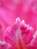 Doorboor tulpenbloemblaadjes Royalty-vrije Stock Afbeelding