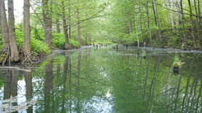 Doordrenkt deel van het bosmeer Stock Foto