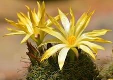 Doorn en bloem royalty-vrije stock fotografie