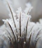 Doorn met vele weerhaken met ijs royalty-vrije stock foto