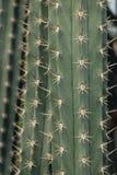 Doorn van de achtergrond van het cactusblad stock afbeelding