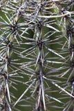 Doornen van Saguaro-cactus, Arizona, de V.S. royalty-vrije stock foto