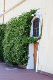 Doors and Ivy. A old building's stucco exterior door surrounded by green ivy Royalty Free Stock Photo