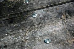 Doorstaan hout. Stock Afbeelding
