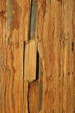Doorstaan hout stock fotografie