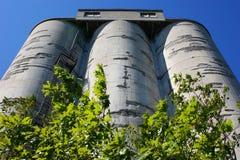 Doorstane concrete silo's met bomen Royalty-vrije Stock Foto's