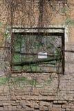 Doorstane gebarsten bakstenen muur met klimop Stock Fotografie