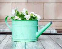 Doorstane groene die gieter met bloemen op een houten lijst wordt gevuld royalty-vrije stock afbeelding
