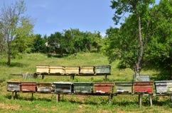 Doorstane houten bijenkorven op heuvelhelling Royalty-vrije Stock Foto's