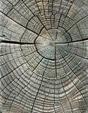 Doorstane houten korrel Stock Fotografie
