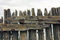 Doorstane houten polen in het Wadden Overzees Stock Foto