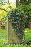 Doorstane oude grafsteen met klimop het groeien over de voorzijde stock afbeeldingen
