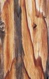 Doorstane Plank Royalty-vrije Stock Afbeelding