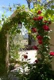 Doorway. Climbing plants on an outside doorway stock images