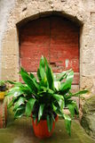 Doorway With Large Leafed Plant. An old wooden door in Tuscany Italy with a large leafed potted plant outside of it, almost blocking access royalty free stock photography