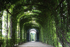 Doorway to Heaven. Metal frame ivy doorway at the Palace Royalty Free Stock Photography