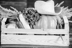 Doos of mand de houten achtergrond van oogstgroenten Uitstekende kwaliteitsgroenten Enkel van tuin Het concept van de kruideniers royalty-vrije stock foto