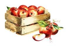 Doos met appelen De illustratie van de waterverf Stock Afbeeldingen