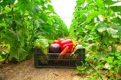Doos met groenten in een serre Royalty-vrije Stock Afbeeldingen