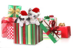 Doos van Katjes als Kerstmisgift Royalty-vrije Stock Fotografie