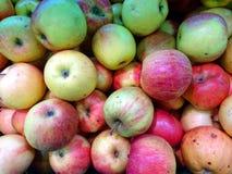 Doos van rode en gele appelen in slechte staat Royalty-vrije Stock Afbeeldingen