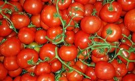 Doos van tomaten Stock Foto
