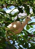 Doov на дереве Стоковые Изображения RF