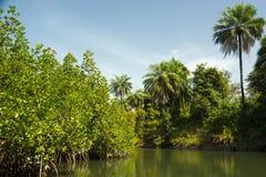 Dopływ Rzeczny Gambia blisko Makasutu lasu w Gambia, Obraz Royalty Free