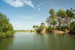 Dopływ Rzeczny Gambia blisko Makasutu lasu w Gambia, Zdjęcie Stock