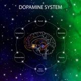 Dopamine pathways in the brain. Dopamine functions. Neuroscience medical infographic. Striatum, substantia nigra, hippocampus,