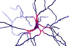 Dopaminergic neuron. Degeneration of this brain cells are responsible for development of Parkinson`s disease. Dopaminergic neuron, computer reconstruction stock illustration