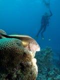 Dopatrywanie lubi hawkfish Nad filary Obrazy Stock