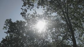 Dopatrywanie pod trees@ Bonfim parkiem obrazy royalty free