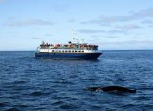 dopatrywanie wieloryb Zdjęcia Stock