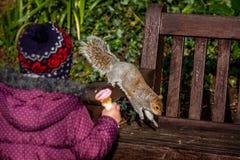 Dopatrywanie wiewiórki bieg obraz stock