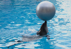 dophin με τη σφαίρα Στοκ φωτογραφία με δικαίωμα ελεύθερης χρήσης