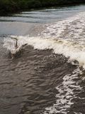 Dophin που πηδά στα ίχνη της βάρκας Στοκ φωτογραφία με δικαίωμα ελεύθερης χρήσης