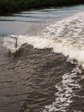 Dophin die in kielzog van boot springen royalty-vrije stock foto