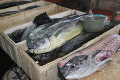 Dophin fishes in the fish market of Jimbaran, Bali. Dophin fishes in a stand of the fish market of Jimbaran, Bali stock image
